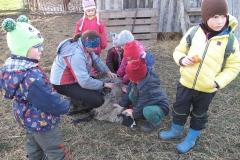 Stříhání ovečky